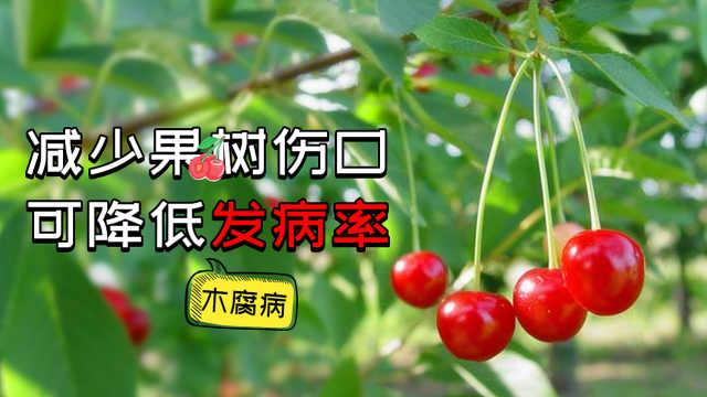 减少果树伤口可降低木腐病发病率