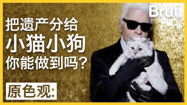 老佛爷的猫,能继承他的遗产吗?