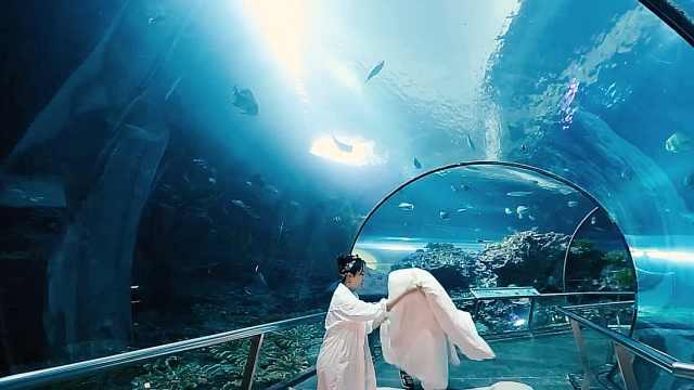 女神级主播在台湾体验夜宿海洋馆
