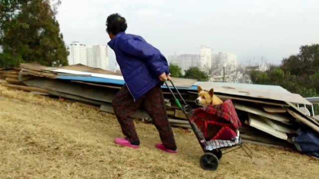 韩国老奶奶把流浪狗当孩子