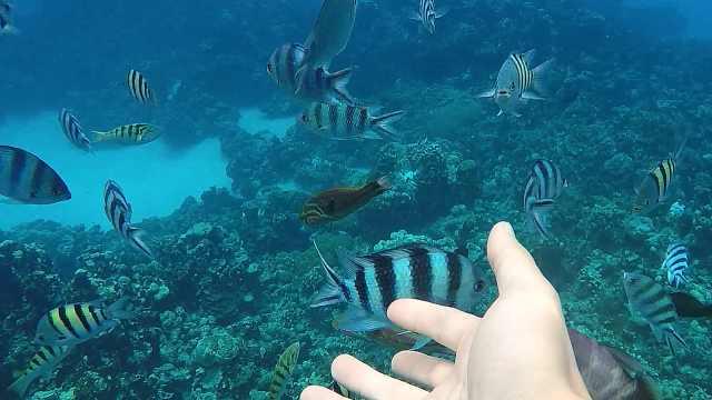 天宁岛浮潜乐趣,与海洋生物面对面