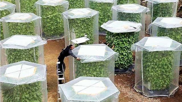 新型种菜法,不用土,收成翻6倍!