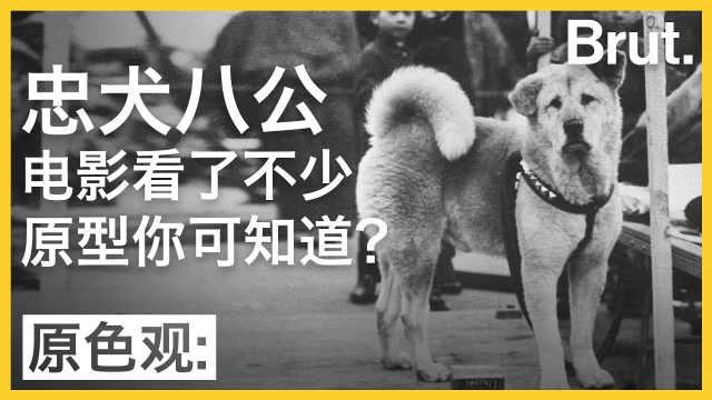 电影忠犬八公的故事原型你可知道?