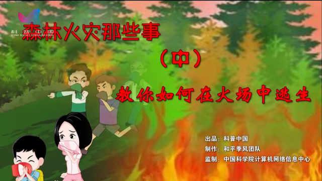 森林火灾那些事(中)