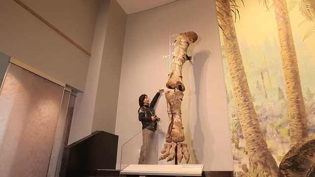 探访全世界最全面的古生物博物馆