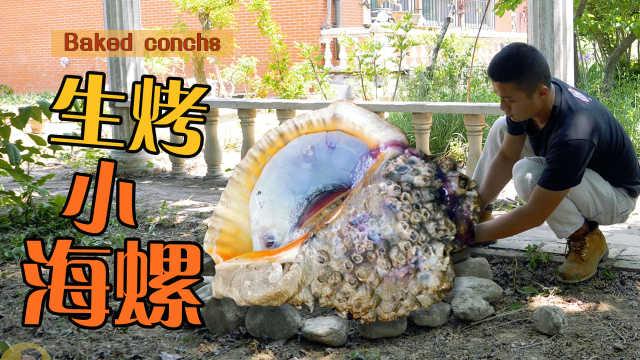 海螺肉放在火上烤,每个都肥得很!