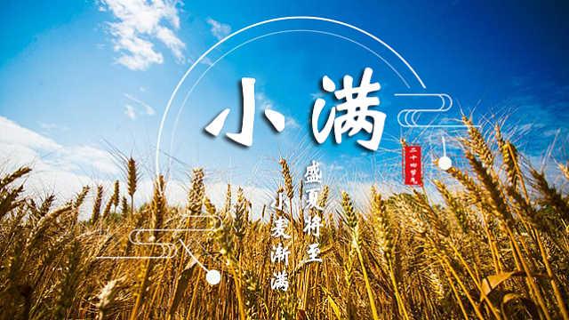 小满:盛夏将至,小麦渐满