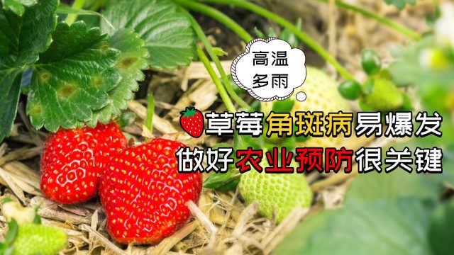 草莓叶斑病发病规律及防治方法指南