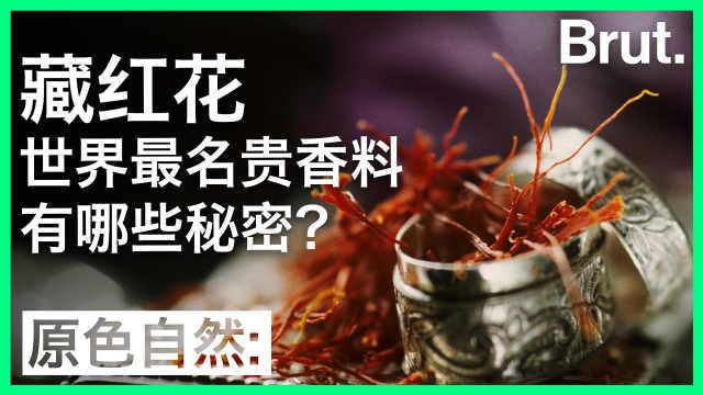 藏红花:名贵香料的背后有何秘密?