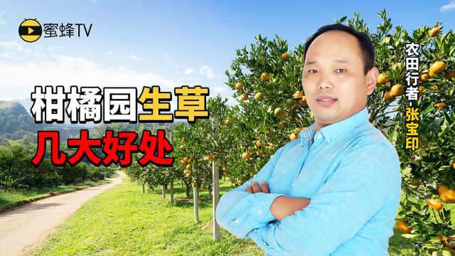 柑橘园里生草几大好处详解!