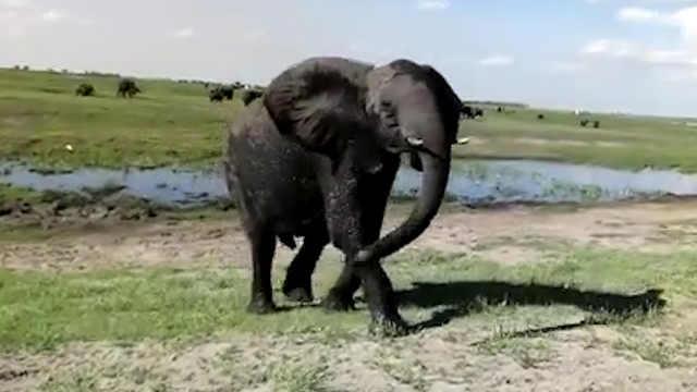 博茨瓦纳的农民和动物不断发生冲突
