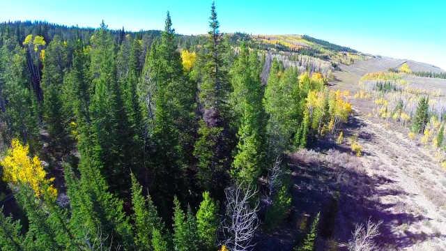 种万亿棵树或能缓解全球变暖!