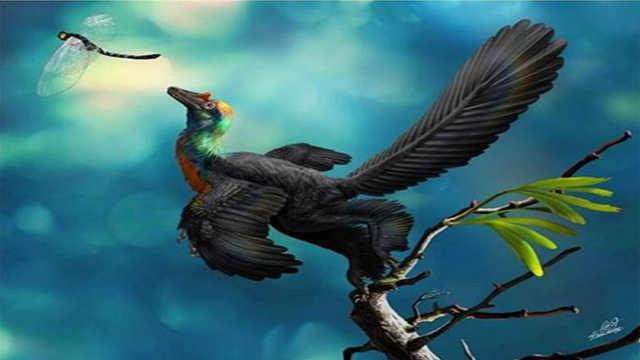 爬行动物中谁才是飞翔第一兽?