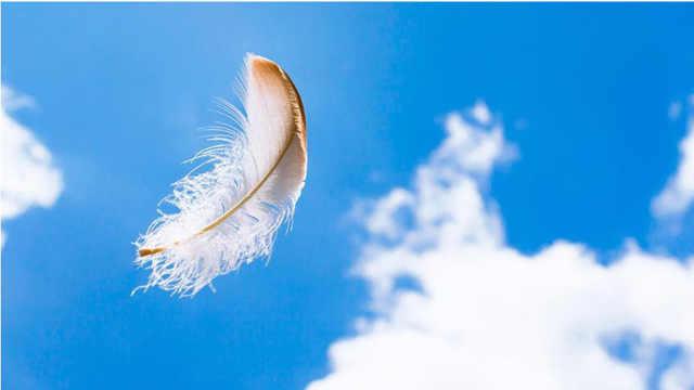 羽毛是否为鸟类独有?