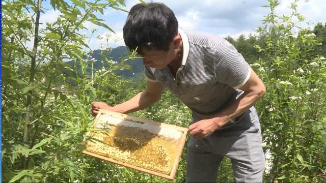 甜蜜事业!贫困户养蜂发家帮带村民
