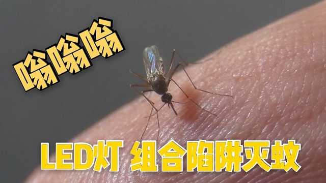 巴西设计LED灯解决烦人蚊虫叮咬