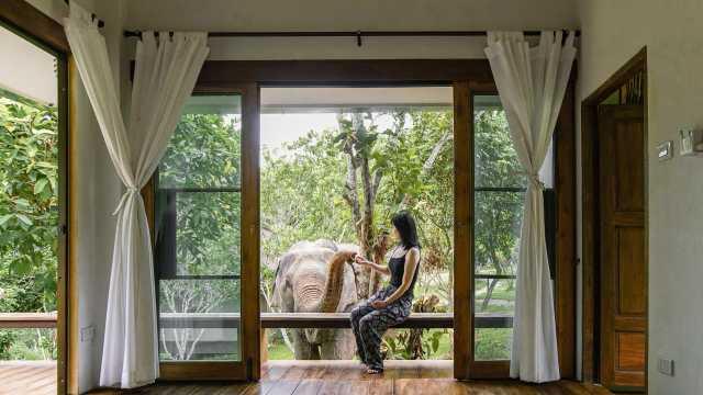 全球唯一一家和大象同住的民宿